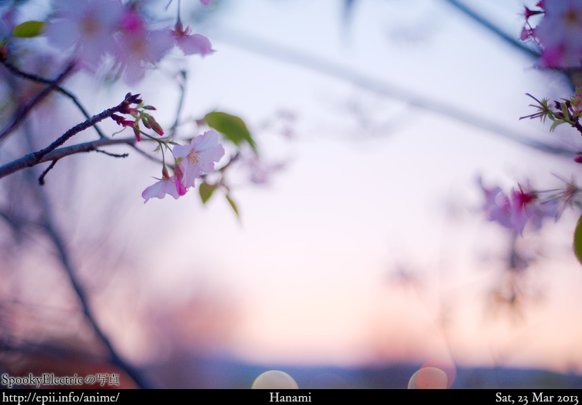 Picture: Sakura Sunset